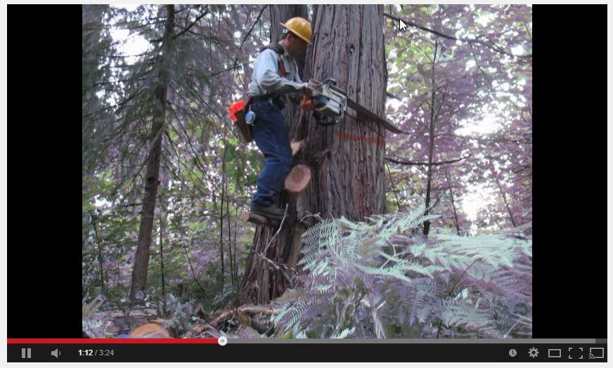 Video Link to Springboard in a Schoolmarm Cedar